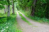 Estrada de terra verde — Fotografia Stock