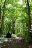 Footpath in forest — Stock Photo