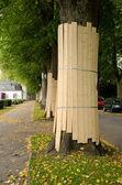 Skyddade träd — Stockfoto