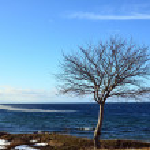 Lone tree — Stok fotoğraf