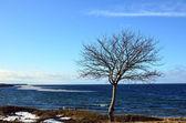 Lone tree — Stock Photo