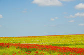 Colorful field — Stock Photo