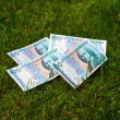 Stock Photo: Banknotes at lawn