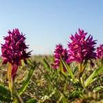 ������, ������: Among purple flowers