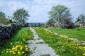 Dandelion road — Stock Photo