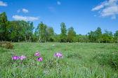 Marsland beauty — Stock Photo