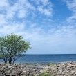 Stock Photo: Lone tree at coast