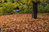 Fallen leaves — Stock Photo