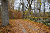 Autumnal country road — Stock Photo