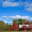 Red fall colors — Stockfoto