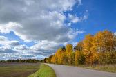 Roadside aspens at fall — Stock Photo
