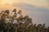 Okinawan grass landscape — Stock Photo
