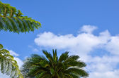 Tropical branches — Stock Photo