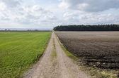 Dirt road in a rural landscpae — Stock Photo