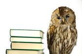 Owl at a book pile — Stock Photo