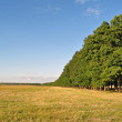 A row of green trees — Stock Photo