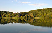 Trees reflection — Stock Photo