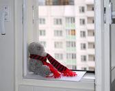 Grey Bear. — Stock Photo