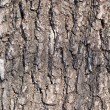 Stock Photo: Bark of tree.