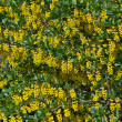 Stock Photo: Yellow flowering.