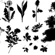 Collection of plants silhouettes. — Vecteur