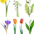 Set of spring flowers. — Stock Vector #44812657