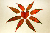 Isolated red heart-shaped leaf on white — 图库照片