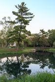 Pinho e passarela reflectida na água — Fotografia Stock