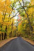 Fall tree tunnel — Stock Photo