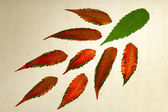 Isolated multi-colored leaves — Stock Photo