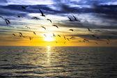 Cloudy sunset — Stock Photo