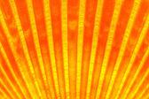 Glowing sea shell — Stock Photo