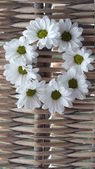 Rustic Daisy wreath — Stock Photo