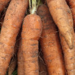 Muddy carrots — Stock Photo