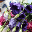 lisianthus — Stock Photo