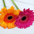 Pink and orange  gerbera laying on white wooden floorboards — Stock Photo