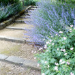 Pretty landscaped pathway — Stock Photo #27155043