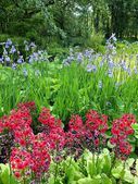 Květinové displej — Stock fotografie