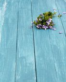 Forget me nots on blue — Stock Photo