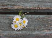 British Wild Flowers — Stock Photo