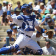A.J. ELLIS in action during the game — Stock Photo #18457881