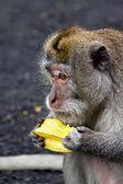 Monkey is eatting a fruit — Stock Photo