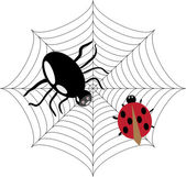 Spider is hunting on the ladybug — Stock Vector