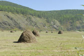 Making hay. Field with haystacks — Stock Photo