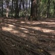 Young man and woman walking among trees in woods — Stock Video
