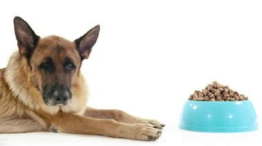 German shepherd dog with bowl of food. — Stock Video
