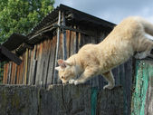 Cat that walks on the fence — Stock Photo