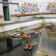 Abandoned Swimming Pool with Grafity on wall — Foto Stock