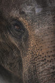 Elephant Portrait — Stock Photo