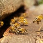 včely a včelí úl — Stock fotografie